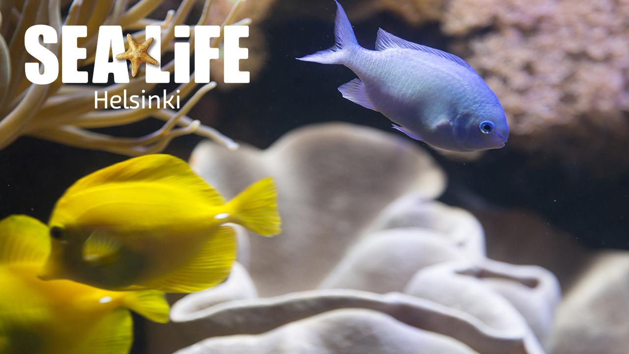 Sea Life Alennus