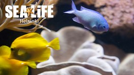 Student discount at SEALIFE